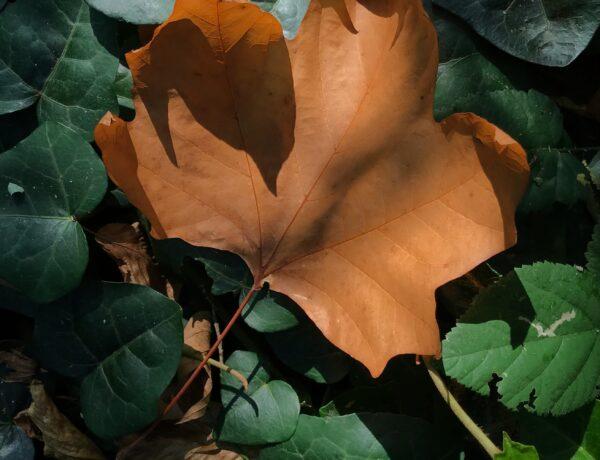 autunno cambio stagione con i rimedi flos animi