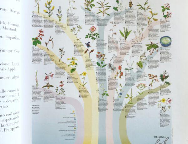 fiori di bach i 7 gruppi